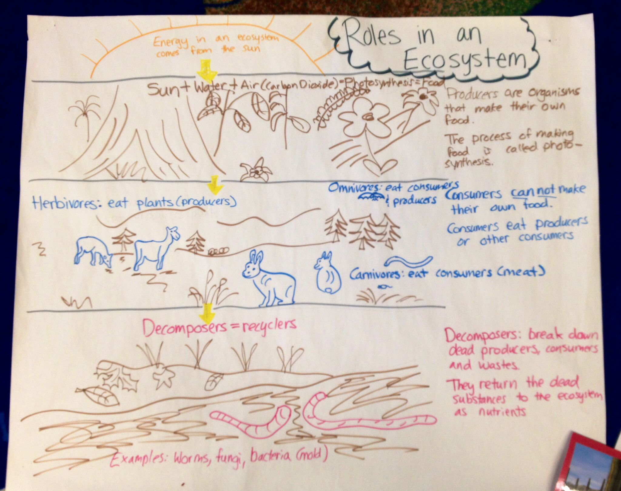 Roles In The Ecosystem Anchor Chart Ecosystem Input Chart