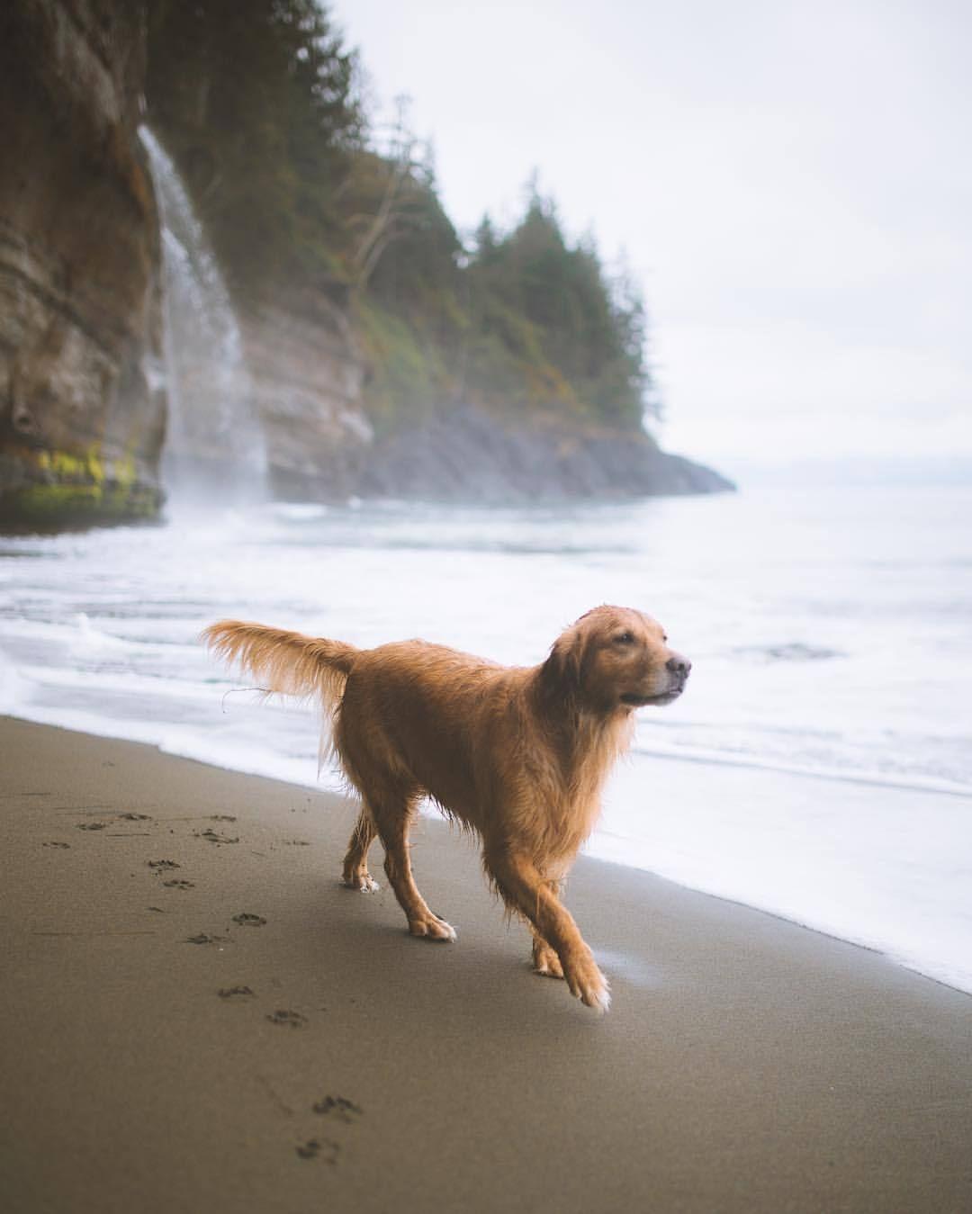 Beach Adventures Johnwingfield At Vancouver Island