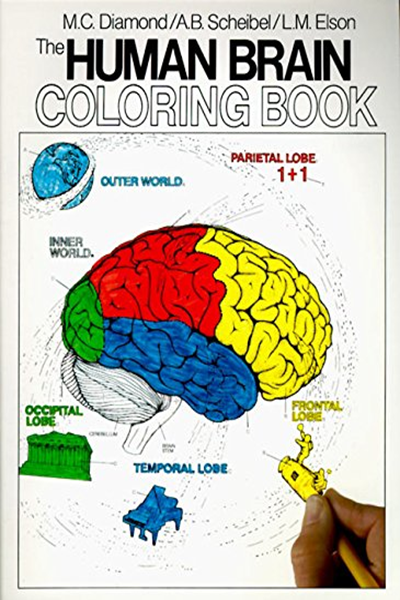 The Human Brain Coloring Book Coloring Concepts By Marian C Diamond Collins Reference Human Brain Anatomy Coloring Book Coloring Books