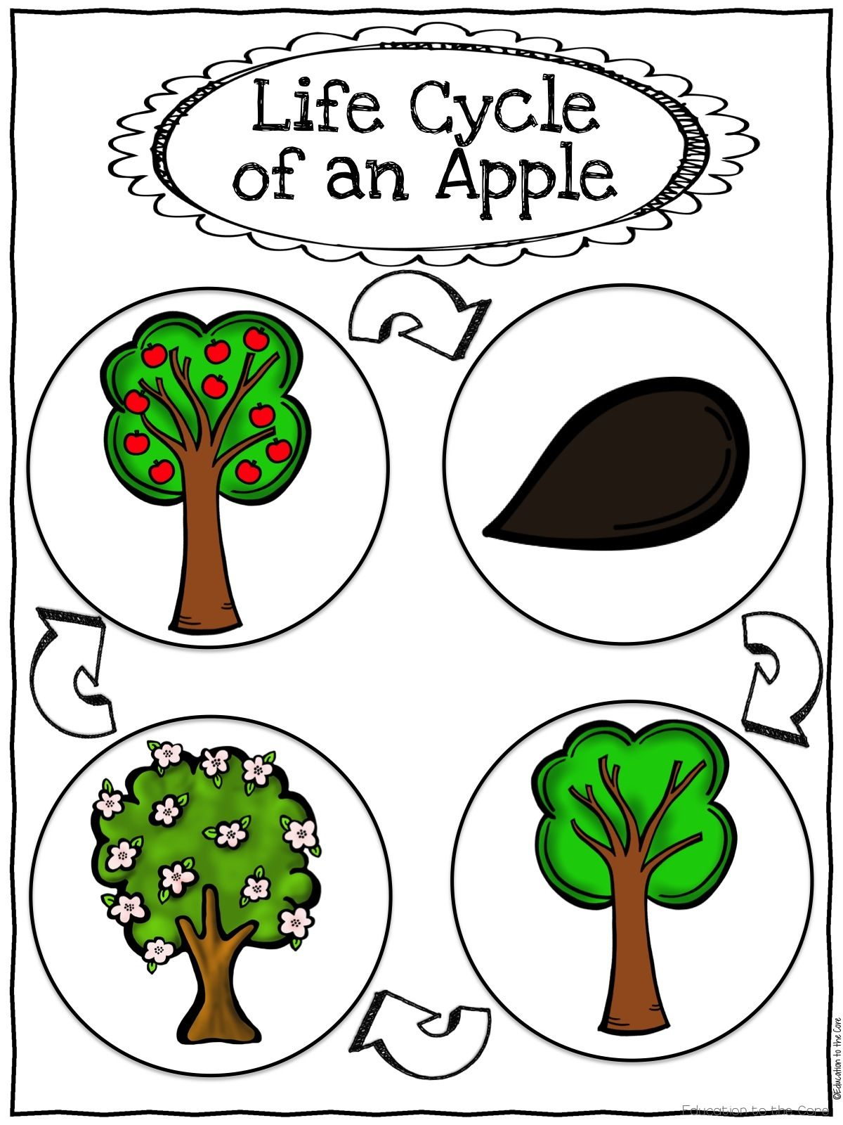 Free Apple Tree Life Cycle Worksheet   Printable Worksheets and Activities  for Teachers [ 1600 x 1200 Pixel ]