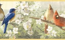 Colorful Birds Wallpaper Border At Borders To Go Bird Wallpaper Wallpaper Border Pretty Birds
