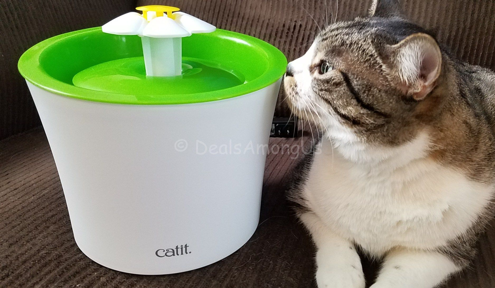 Catit flower drinking fountain review drinking