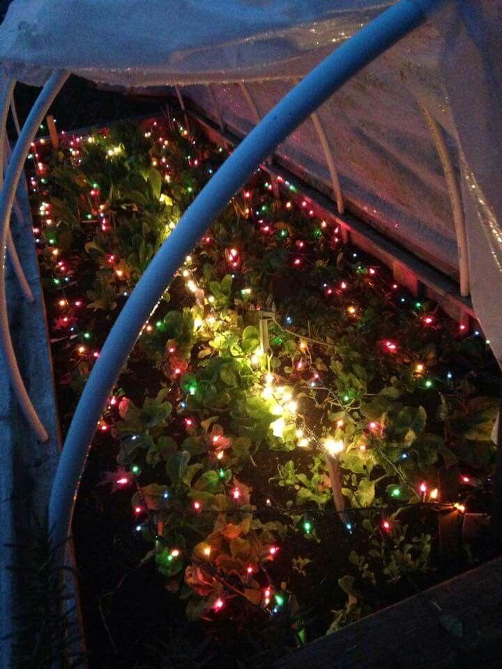 Heat using Christmas lights