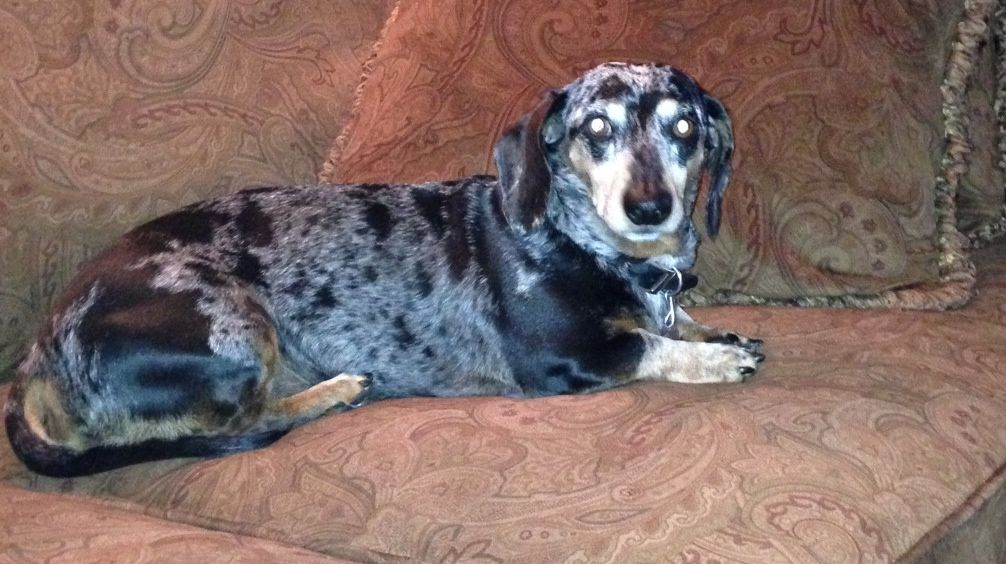 We lost our dog, Oakley, June 20th around 330. He is an 8