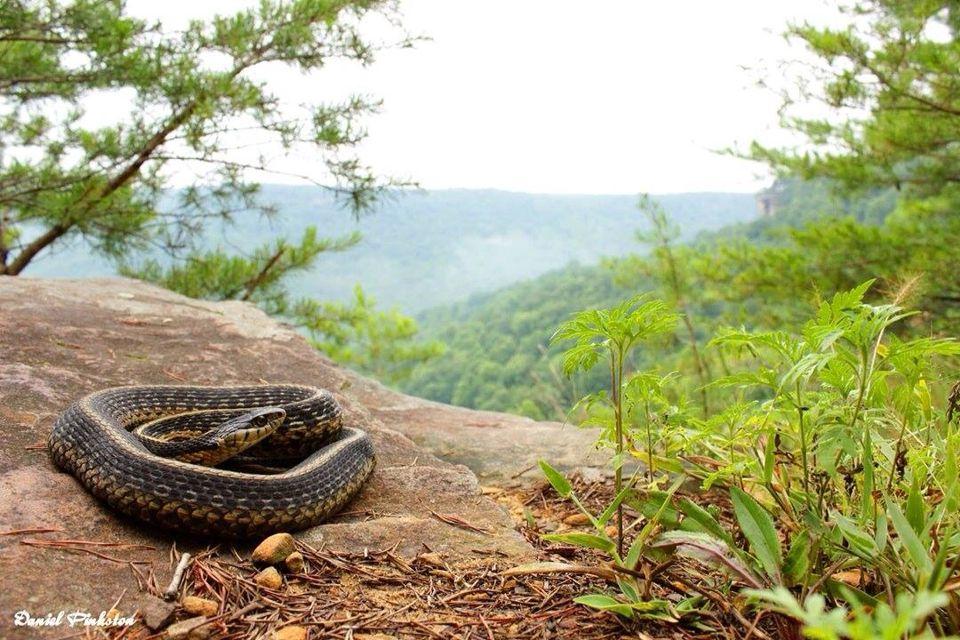Gorgeous garter snake :)