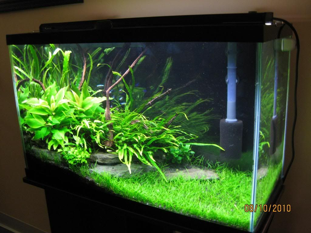 29 gal low tech the planted tank pinterest aquariums for Planted fish tank