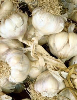 Ulcerative Colitis & Garlic