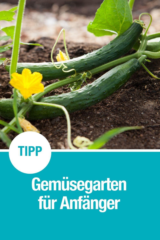 Gemüsegärten für Anfänger: Pflanzen und Ernten leicht gemacht - GARDENA   Gemüsegarten, Gemüse