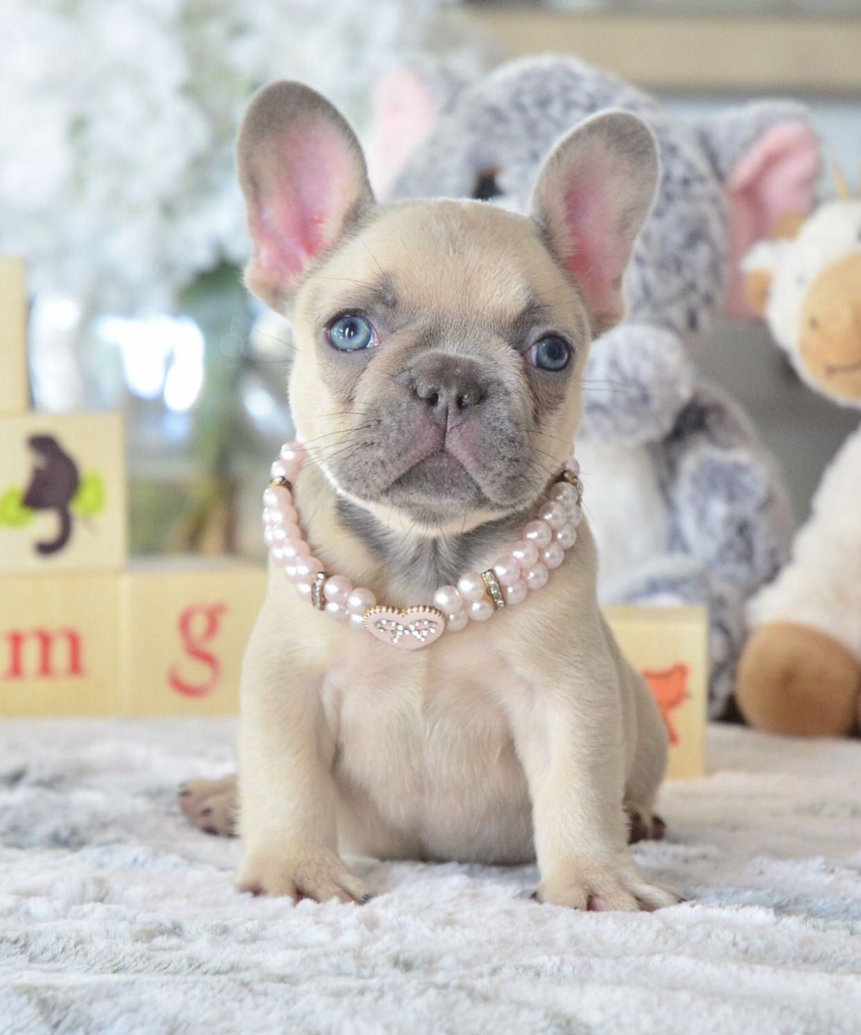 """""""Pretty in Pink 🌸"""" 📲 🐶 French"""