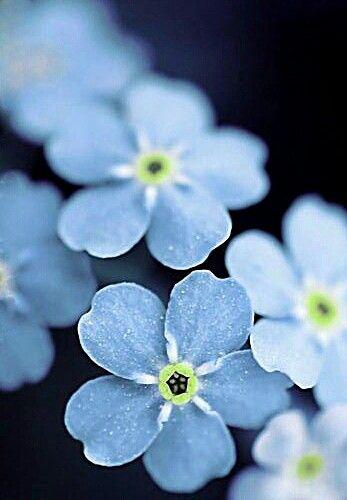 Нежно-голубое