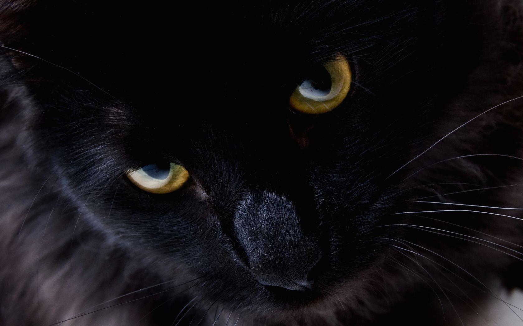 Gerelateerde Afbeelding Zwarte Katten Zwarte Kat Schattige Dieren