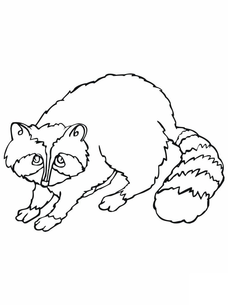 Free Printable Raccoon Coloring Pages For Kids Animal Coloring Pages Bear Coloring Pages Coloring Pages