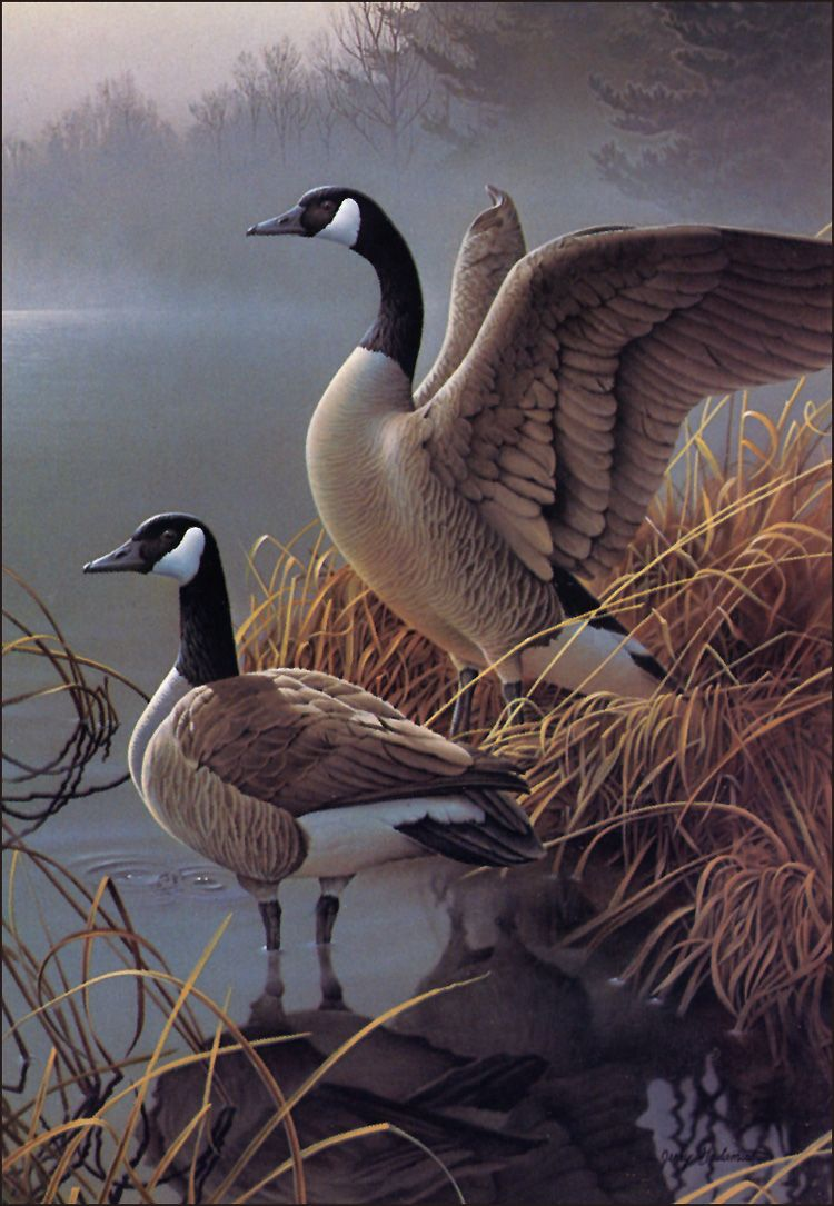 123375121429.jpg (750×1085)   Stylish Bird Prints   Pinterest   Ave ...