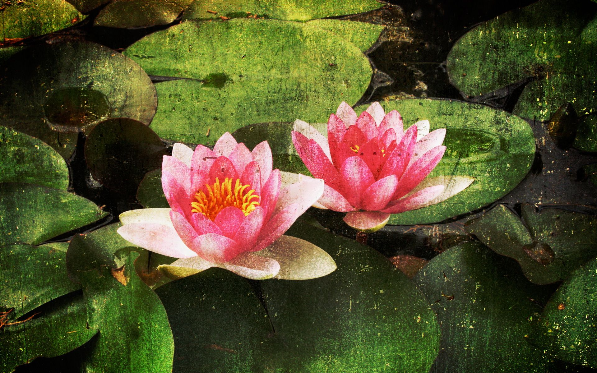 paintings of flowers - water lilies