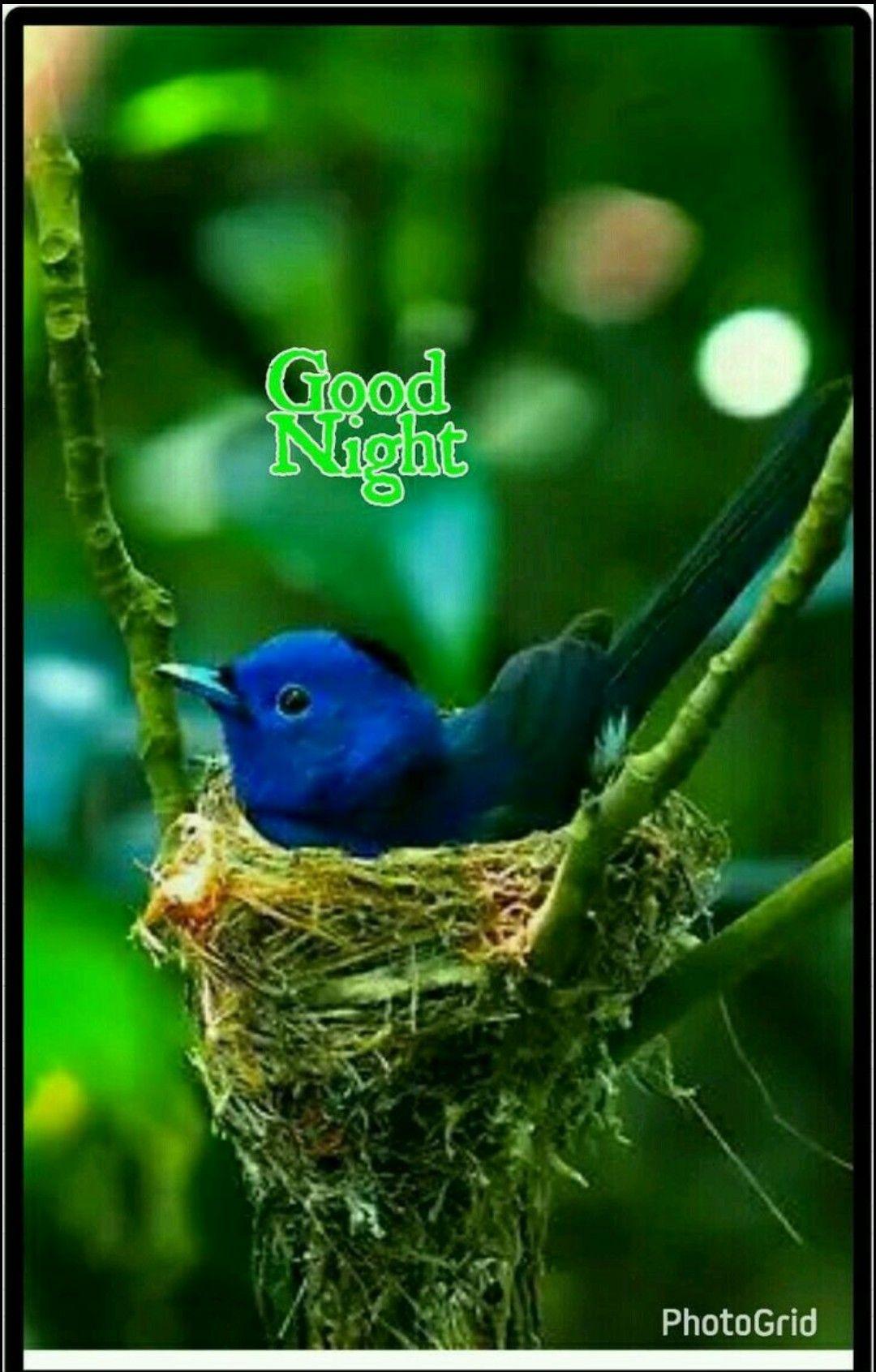 Pin By Sally Bacchus On Sweet Slumber Birds Pet Birds Beautiful