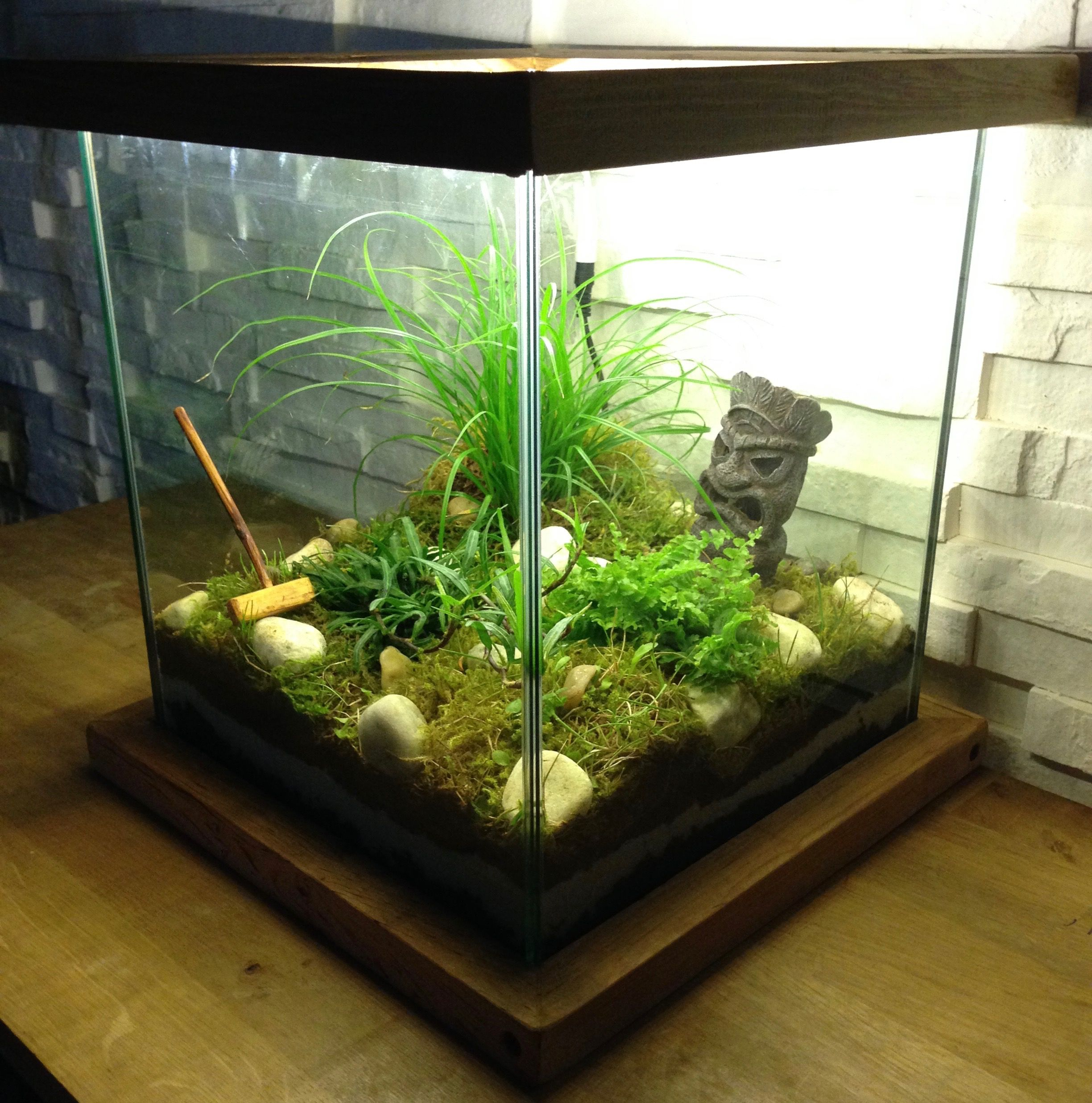 Creer un joli jardin d interieur recycler un aquarium for Aquarium interieur