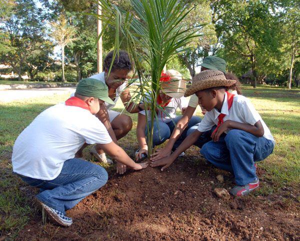 Siembra un árbol y salva al planeta