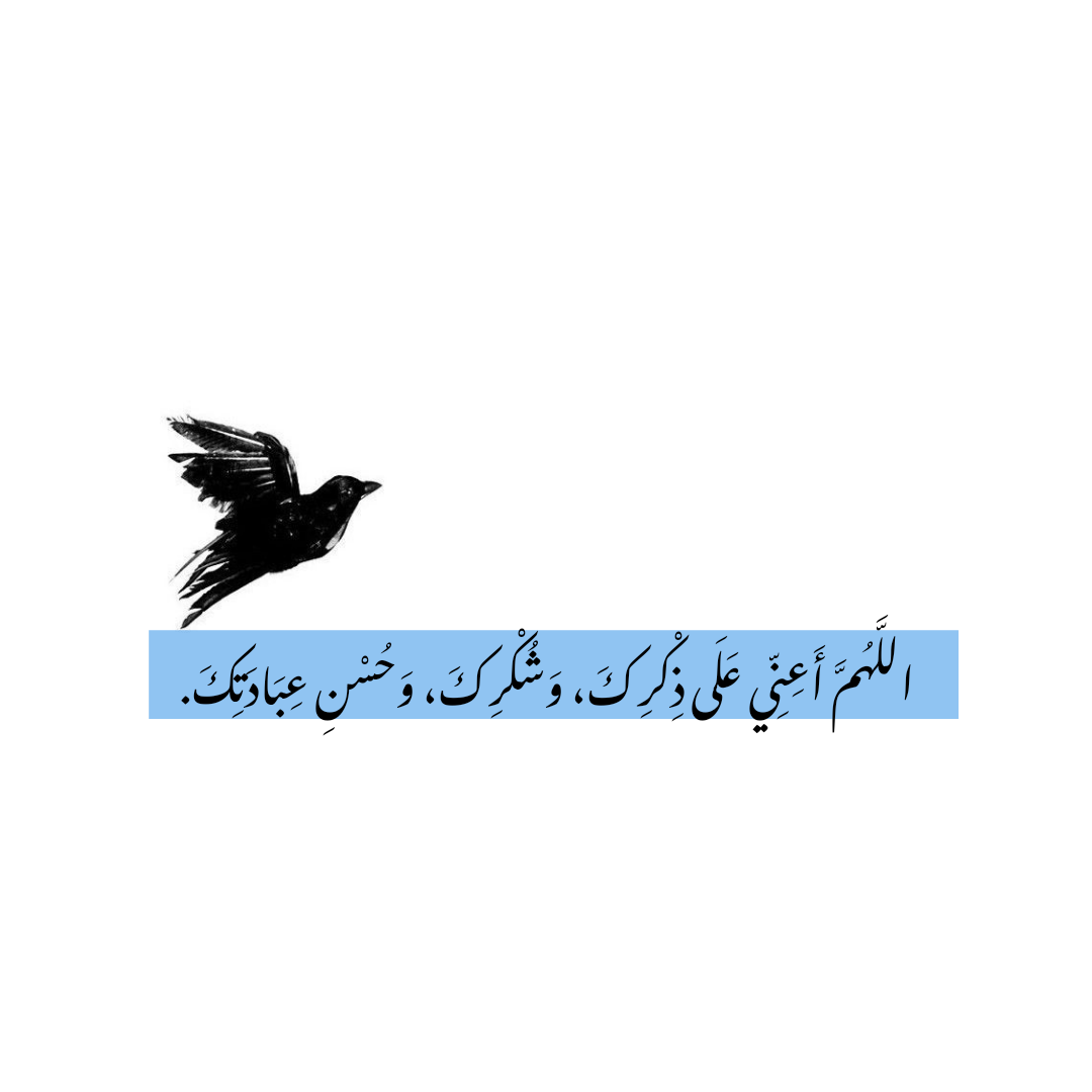 إسلاميات خلفيات صور صورة تصاميم فرح حياة اكسبلور كتابات اقتباسات أمل سعادة Animals Bird