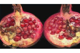 Photo of How to Grow Pomegranates From Seeds