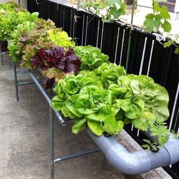 簡単手作り水耕栽培にチャレンジ 家庭菜園をもっと身近に 水耕栽培