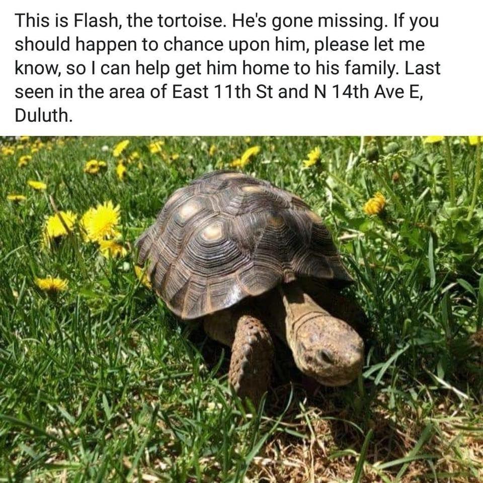 Flash The Tortoise Tortoise Pet Turtle Russian Tortoise