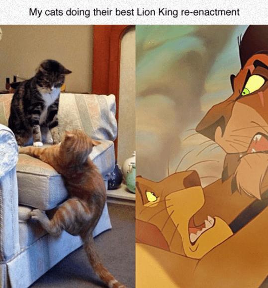 New Funny Disney  Lion King's Recreation