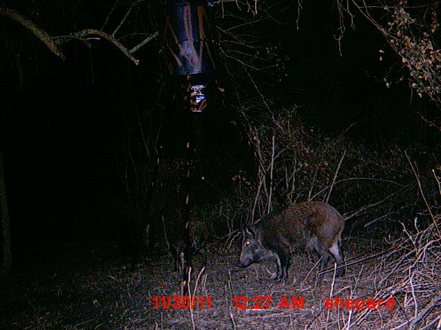 Reaper Archery Hunting Shows Deer Pictures Animals Bugs