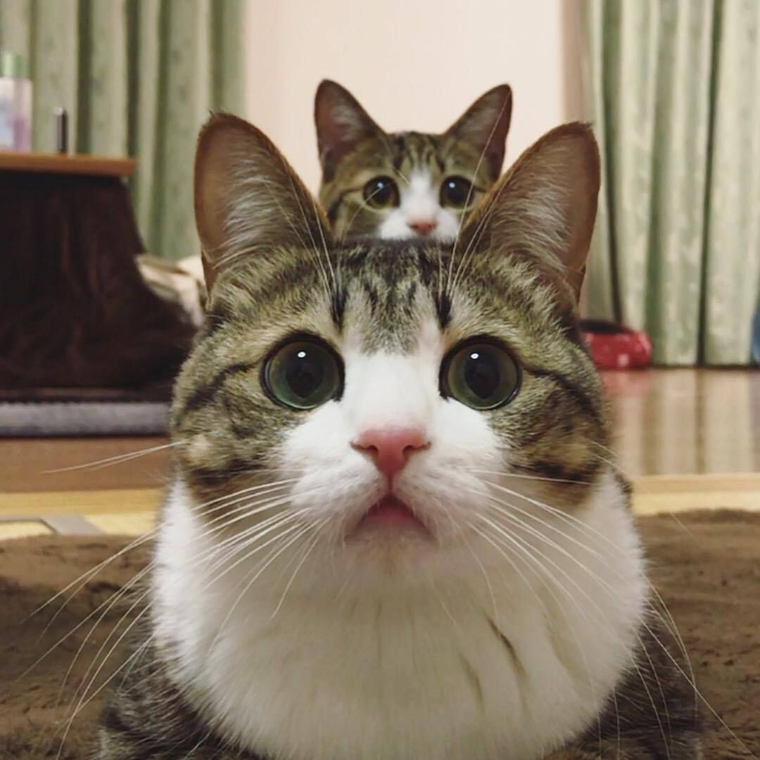 Https Www Tumblr Com Search Cats Kittens Cutest Cute Cats And Kittens Cute Cats