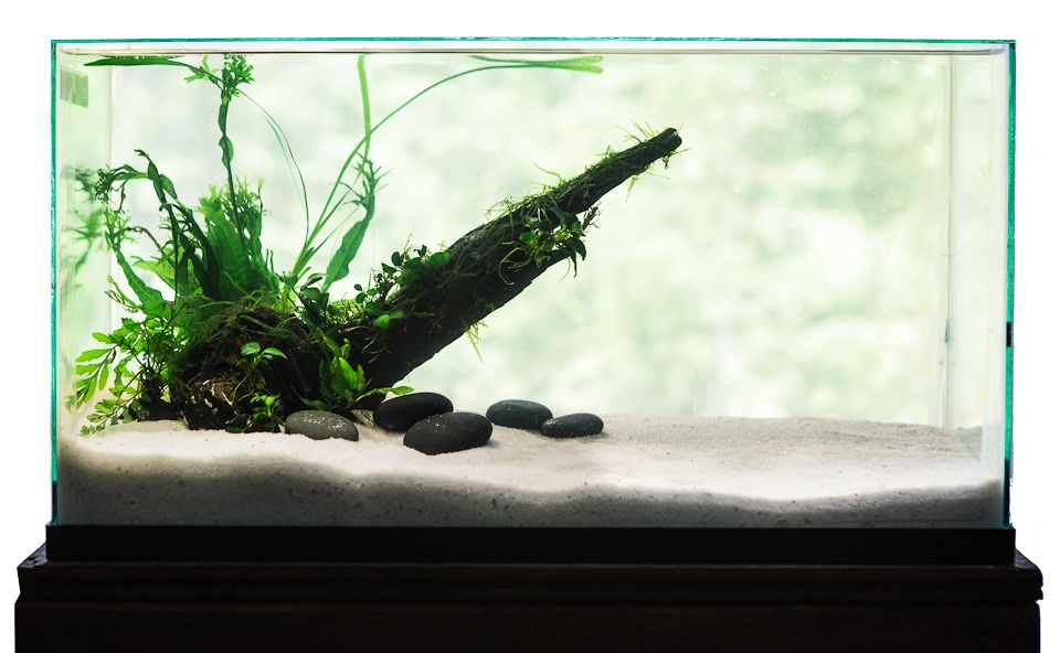 Click This Image To Show The Full Size Version Aquascape Fish Tank Nano Tank