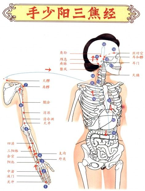 unique acupuncture meridian chart  meridian chart polarity