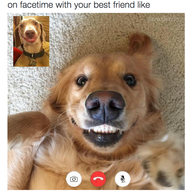 The friend you Facetime with like Funny pictures