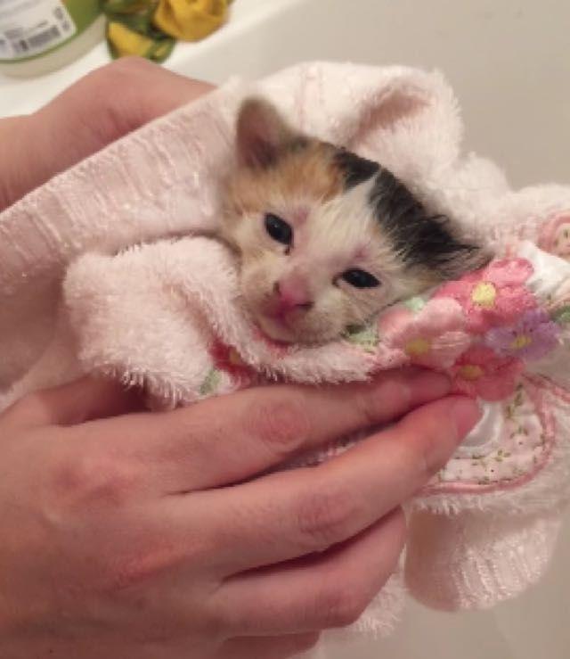 Calico Kitten Gatos Bonitos Gatos Gatos Tiernos