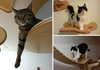 Photo of This wall furniture is the coolest thing your cat will see all day