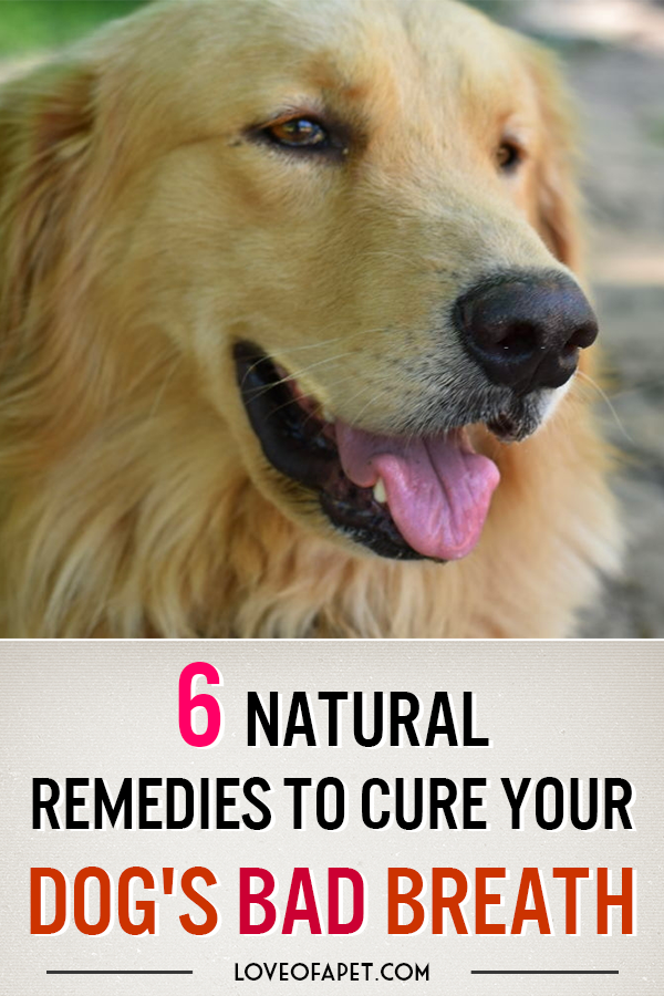 How To Get Rid Of Bad Dog Breath Treatments And Prevention In 2020 Bad Dog Breath Dog Breath Bad Dog