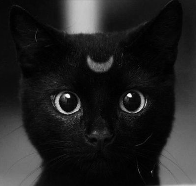 Black Cat Spirit Animal Totem In Dreams In My Sacred Space Cute Animals Best Cat Breeds Cool Cats