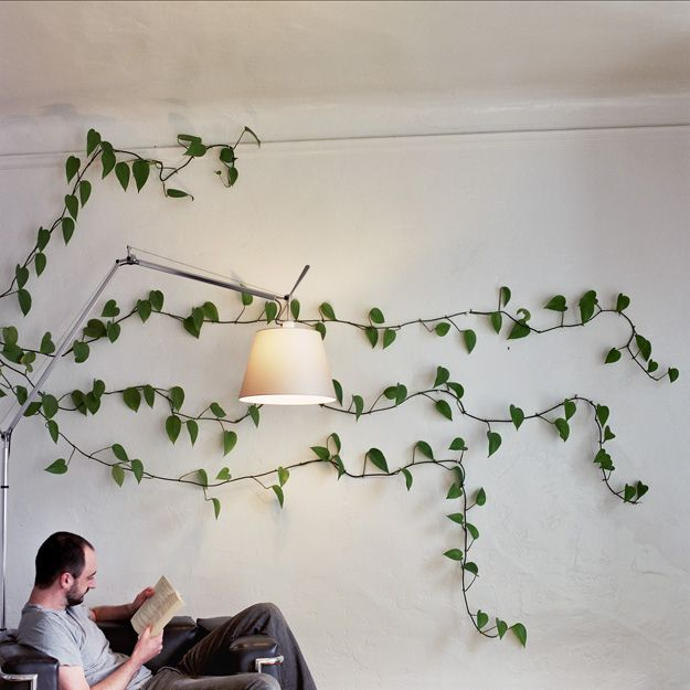 Natural Wall Art Tie Fishing Line Across A Wall And Let The Plant Grow With Images Wall Climbing Plants
