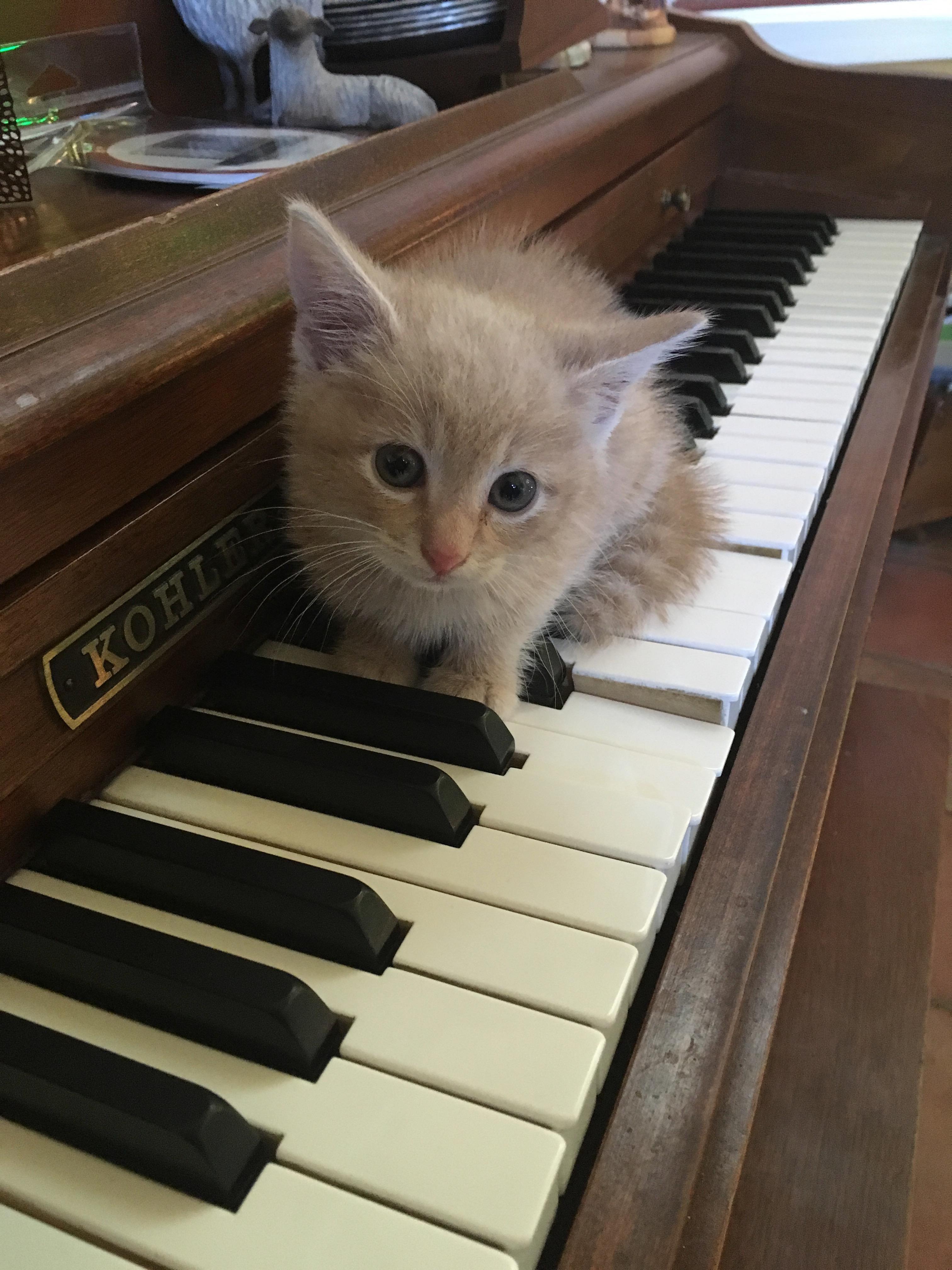 I Got Myself A Keyboard Kitten Https Ift Tt 2chye2m Kitten I Got This Cute Pictures