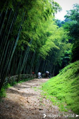 Bamboo forest inn Boseong, South Korea