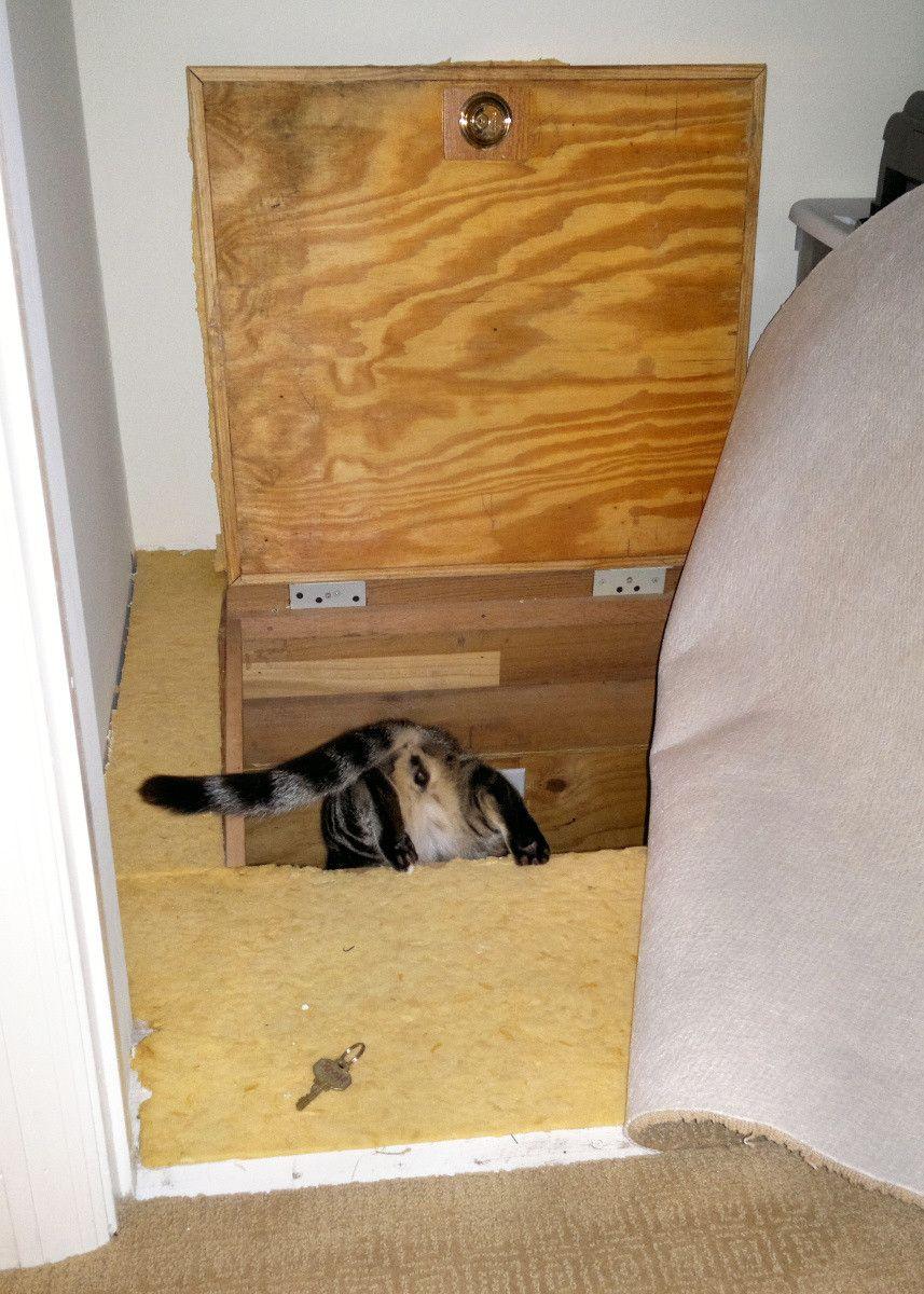 Our Secret Room Crawl Space Secret Rooms Room Trap Door