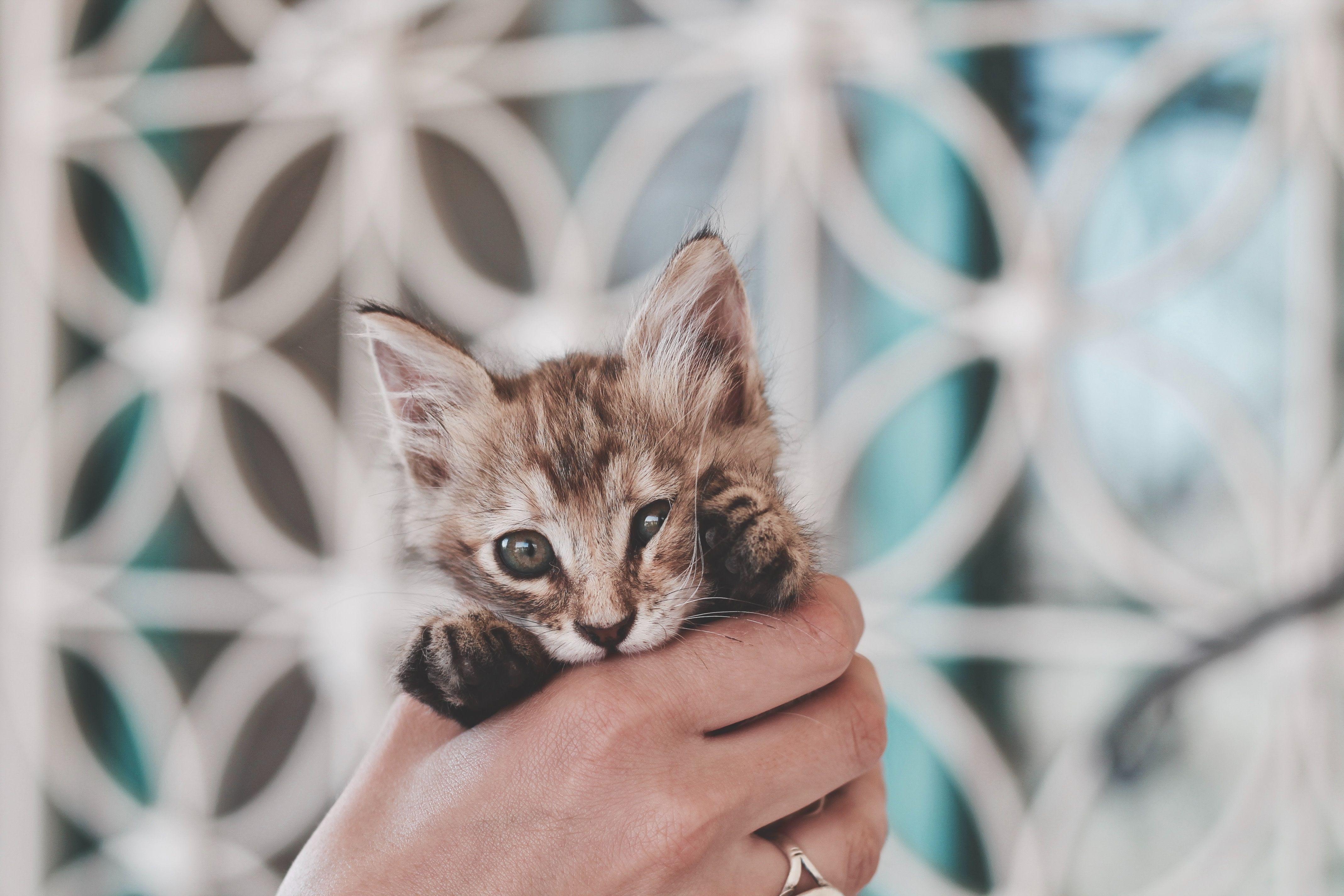 Lol So Fun And Cute Picture Tabby Kitten Cat Dander Grey Tabby Kittens