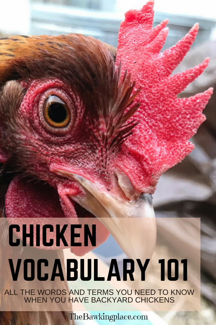 Backyard Chicken Vocabulary 101 | Chickens backyard ...