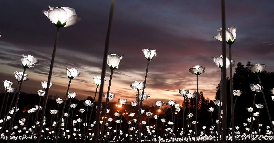 """Instalação """"Luz Sensation"""" com rosas brancas de LED é iluminada durante o pôr do…"""