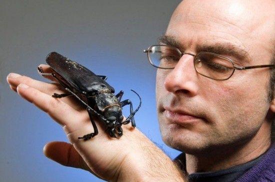 Titan-Beetle