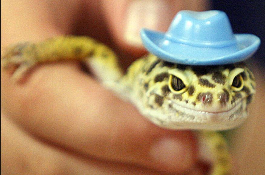 Leopard Gecko Handling For Beginners Leopard Gecko Supplies Care Leopard Gecko Gecko Reptiles Pet