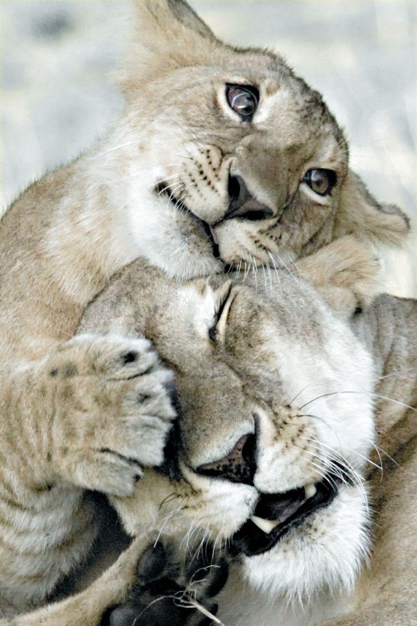 Днем рождения, открытки животные с любовью
