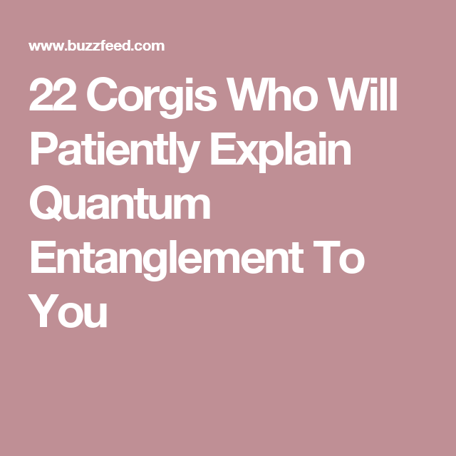22 Corgis Who Will Patiently Explain Quantum Entanglement To You