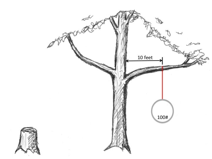 rigging from trees  aerial artsaerial silksaerial     rigging from trees   aerial rigging   pinterest   rigs aerial      rh   pinterest