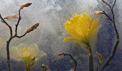 Photograph - Earth To Heaven by Carmen Moise