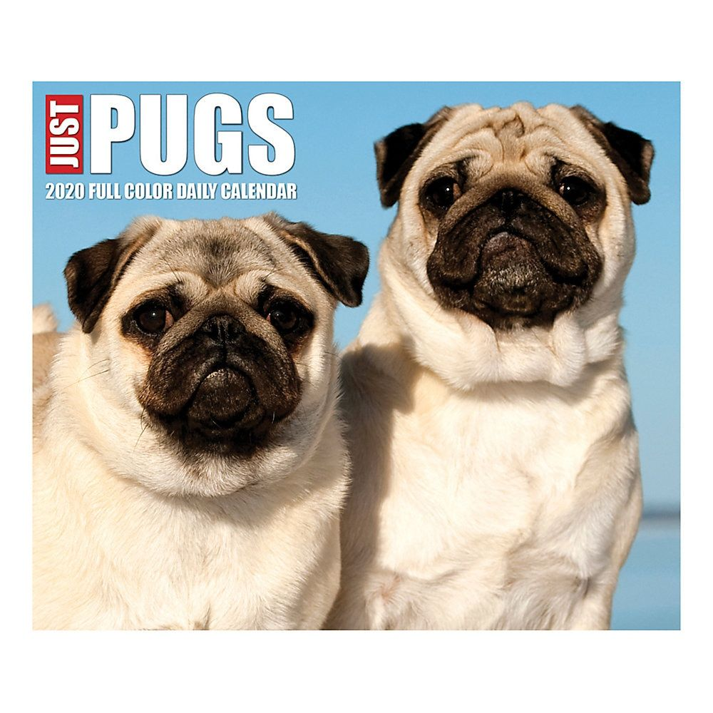 Willow Creek Press Page A Day Daily Desk Calendar Just Pugs 5 1