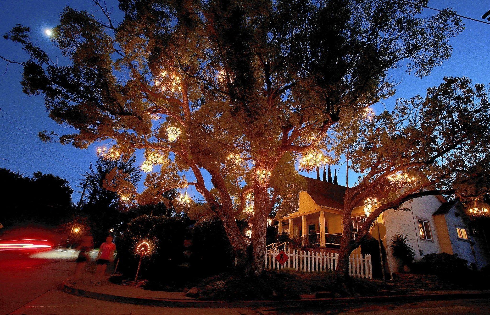 Chandelier Tree is a twinkling star in Silver Lake   Lakes ...